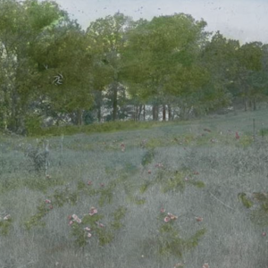 Color image of a field with trees in back
