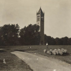 Septic early image of Campanile with path and trees and sheep grazing in foreground