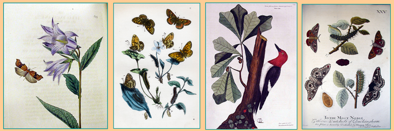 Exhibit: Visions of Scientific Beauty | Selected Botanical and Butterfly Images from the Rare Book Collection